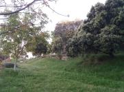 naturaleza 04